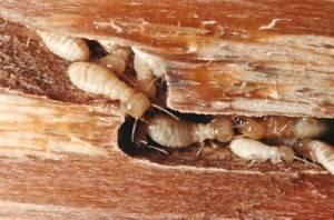 control termitas en valencia