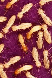 termitas en valencia