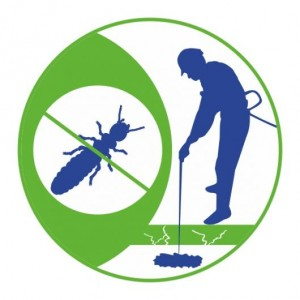 Servicio de tratamiento de termitas en Valencia