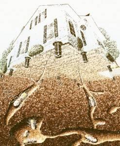 Tratamiento termitas Valencia
