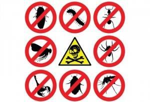 control de plagas urbanas en valencia