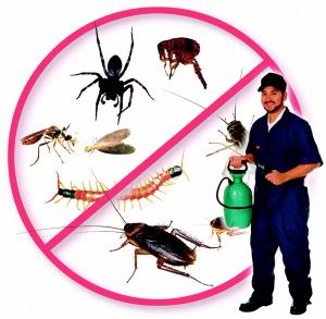Empresa de control de plagas