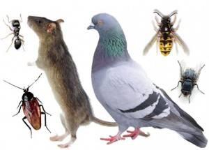 Empresa de fumigación y control de plagas