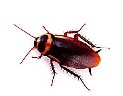 Importancia del control de plagas en la hostelería