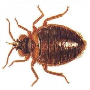 Las plagas más comunes en los hogares