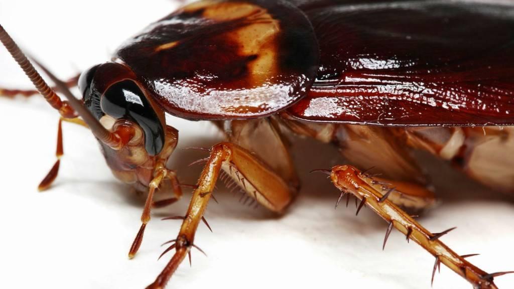 Control de plagas Valencia - Cucarachas, termitas, ratas, ratones y mucho mas