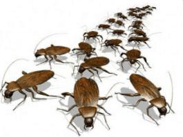 Empresa de control de plagas en Valencia - Mejor calidad y precio
