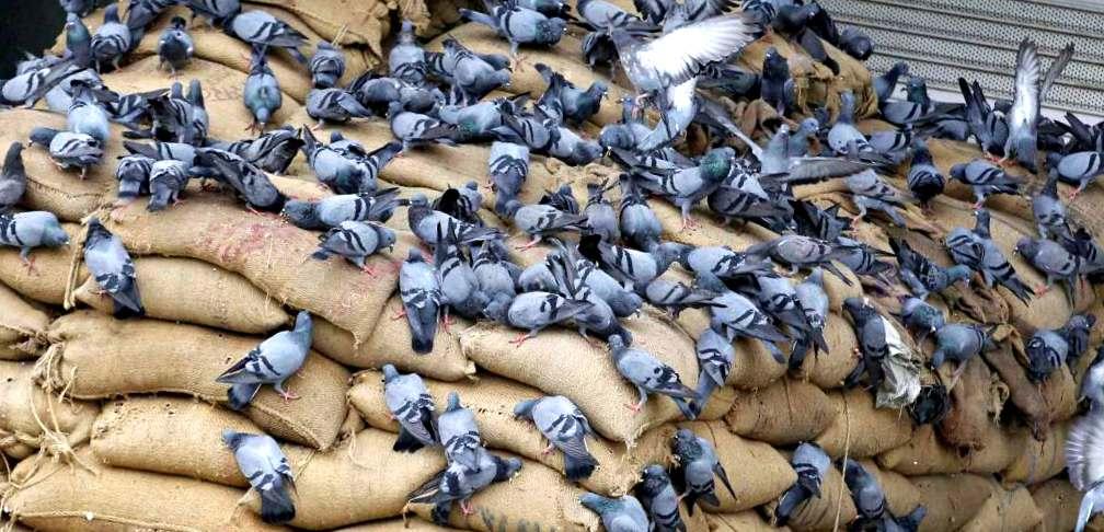 Empresa de fumigación Valencia - Control de plagas de aves