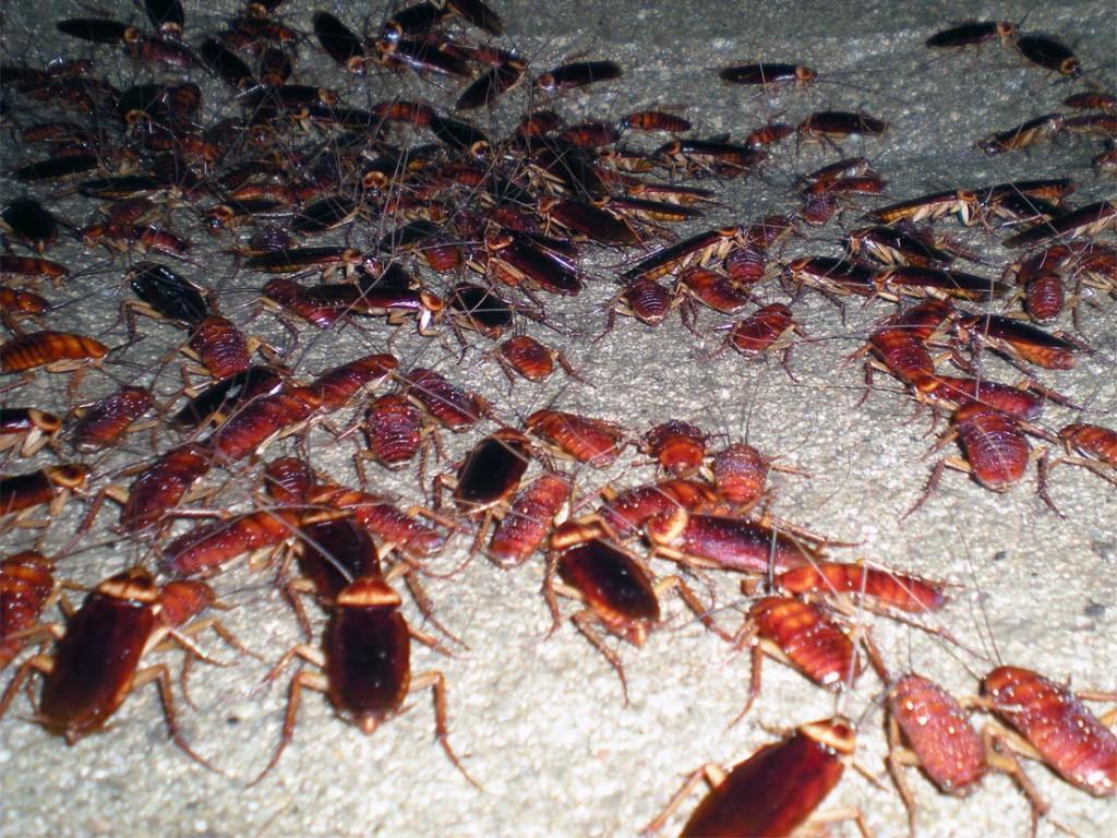 Eliminar insectos Valencia - Empresa profesional