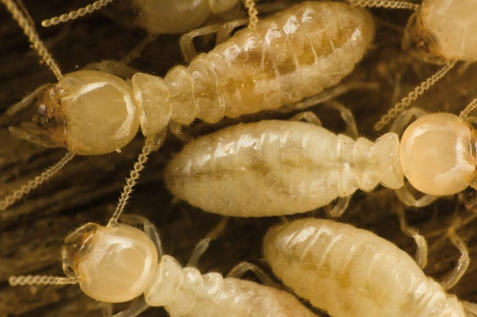Solucionamos problemas de termitas Valencia - Empresa profesional